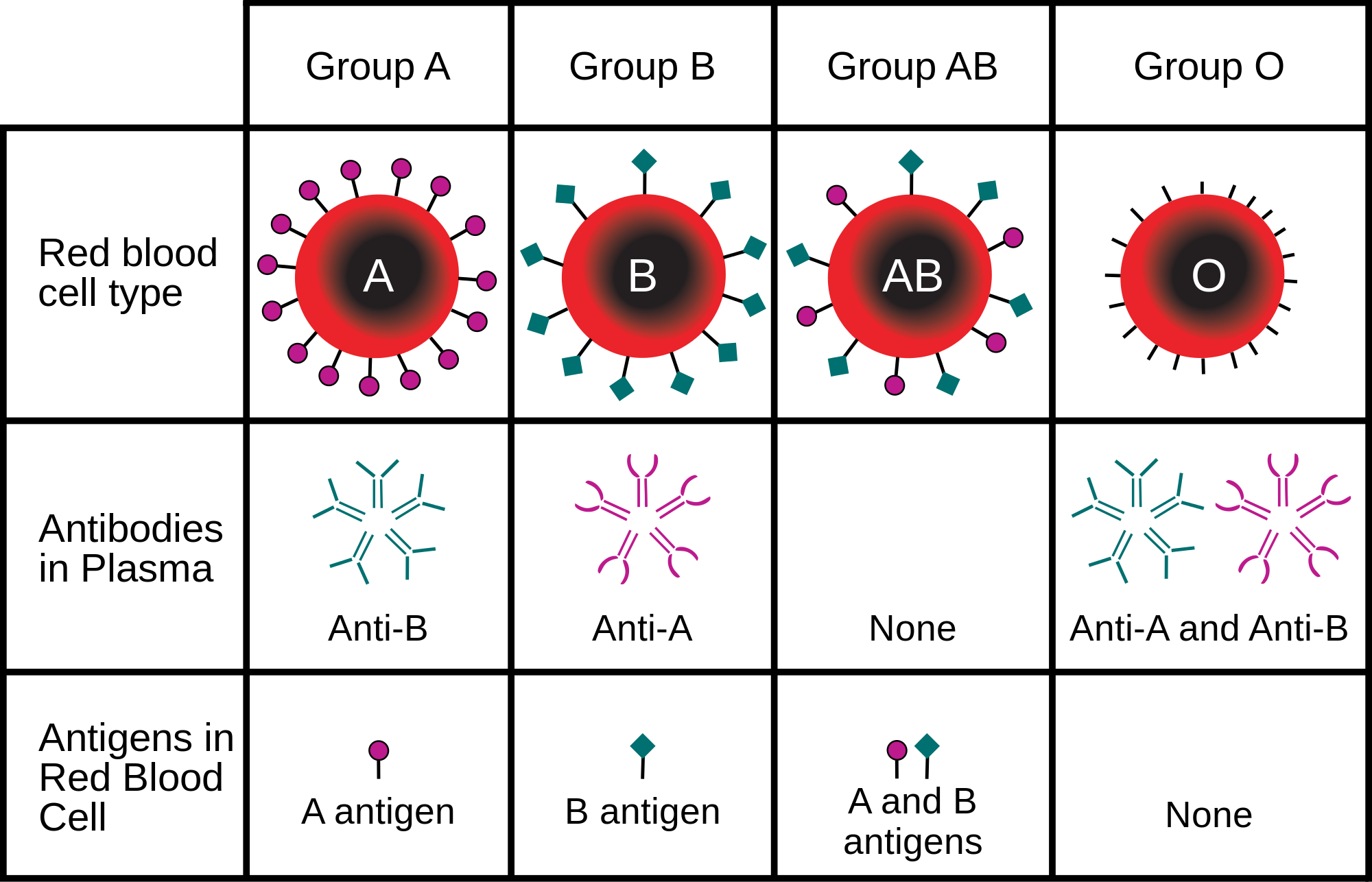 Antigen and antibody relationship between different blood group