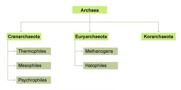 types-of-archaea